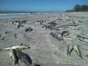 Florida Red Tide - ecologyway.info